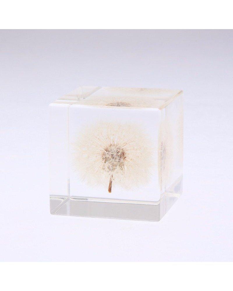 "Sola Cube Dandelion Acrylic Cube 2"""