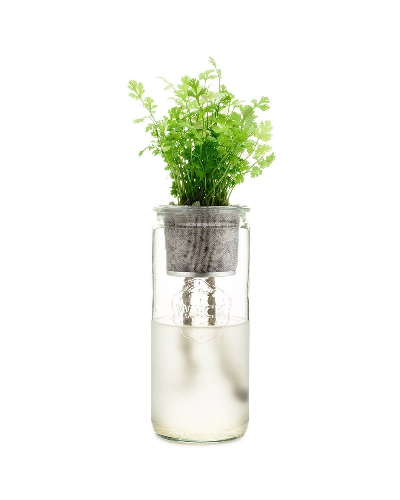 Modern Sprout Eco Planter - Organic CIlantro