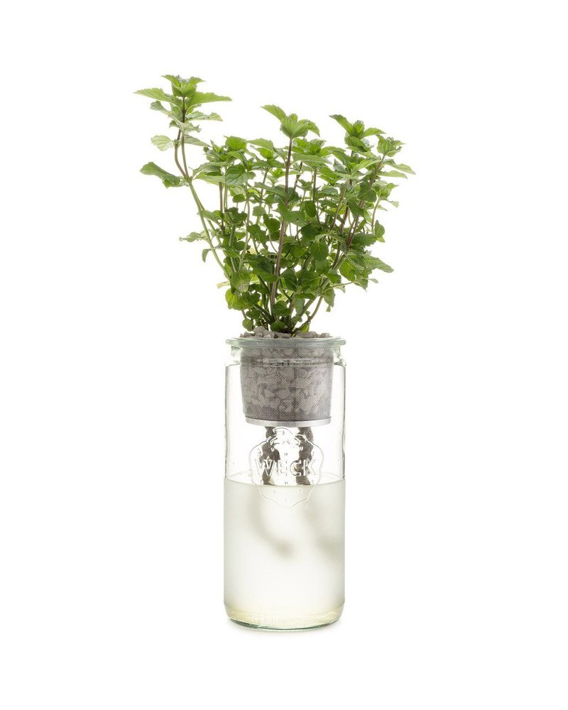 Modern Sprout Eco Planter - Organic Mint