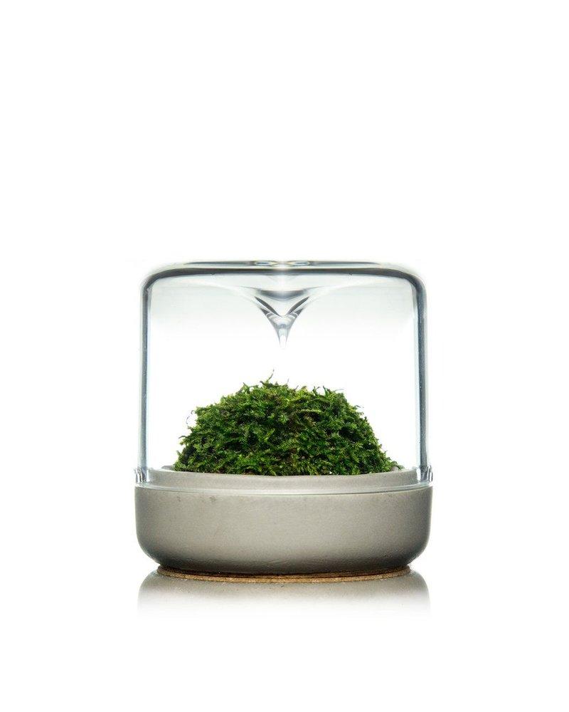 Modern Sprout Small Concrete + Moss Sanctuary Rainforest