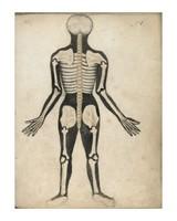 Watson & Co Anatomical Skeleton Back Patent Sign 12x16