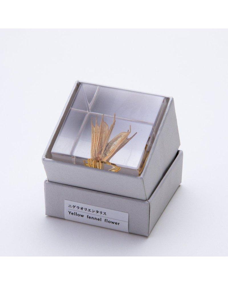 """Sola Cube Yellow Fennel Flower Acrylic Cube 1.6"""""""