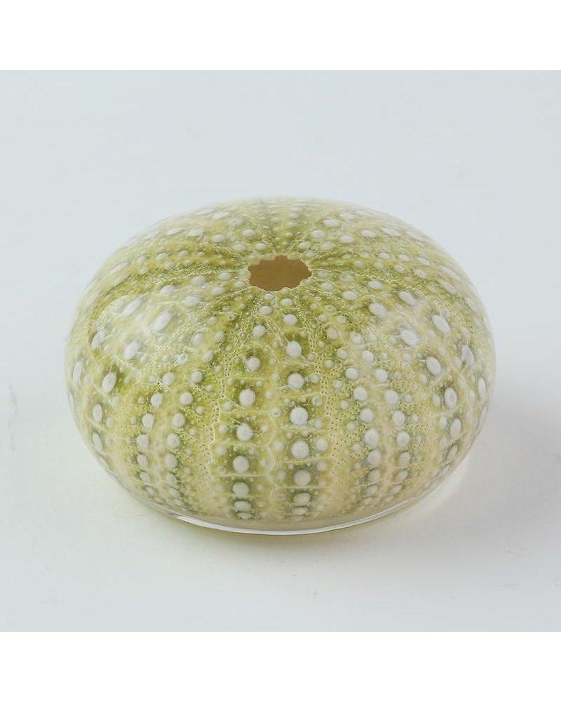 Sola Cube Strongylocentrotus Acrylic Sea Urchin