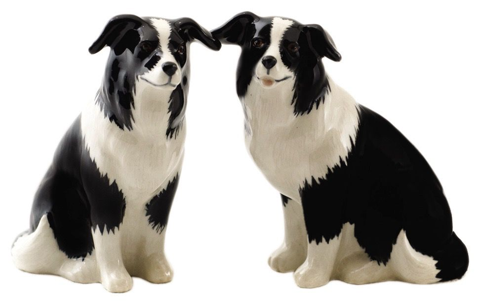 Europe Border Collie salt and pepper