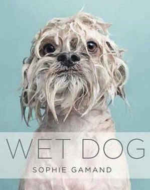 Australia Wet Dog