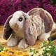 Australia Baby Lop Rabbit Puppet