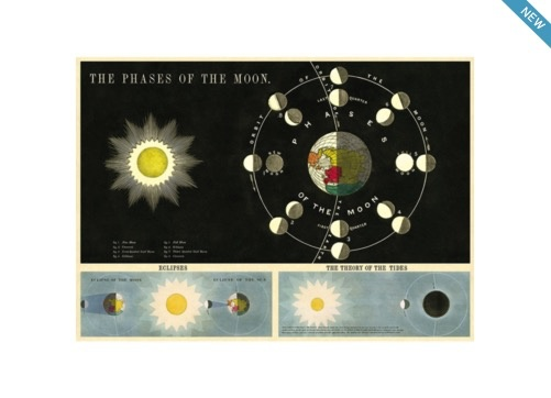 Australia Poster/Wrap - Phases of the Moon