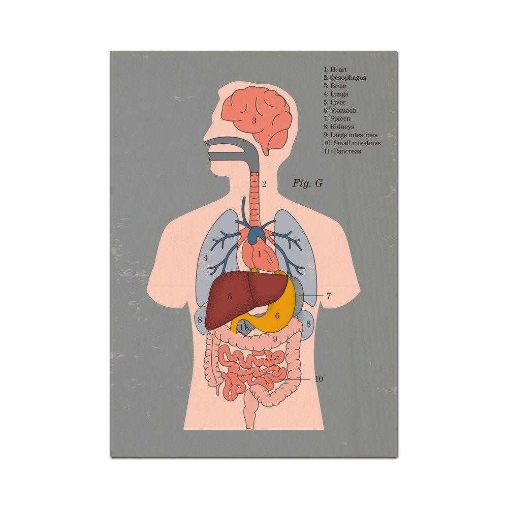 Europe Anatomical Greetings Card - Organs