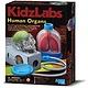 Australia K.L.:HUMAN ORGANS