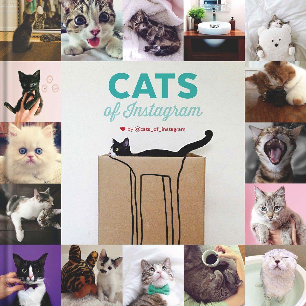 Australia Cats On Instagram