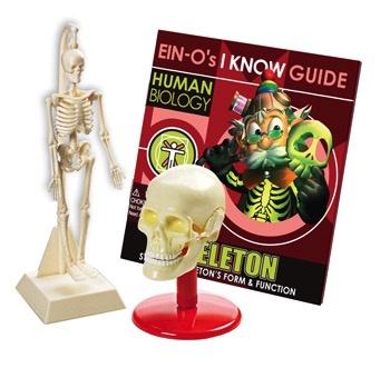 Australia Skull and Skeleton