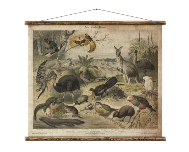 Australia Australian Fauna Chart
