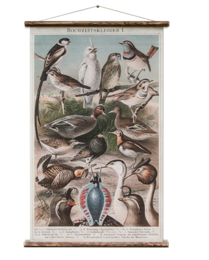 Australia Birds Chart