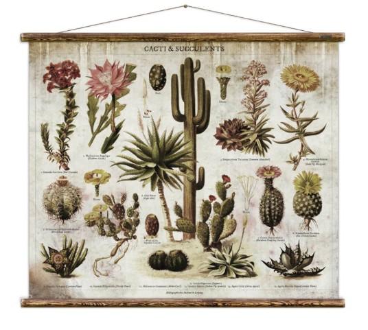 Australia Cacti & Succulents Chart