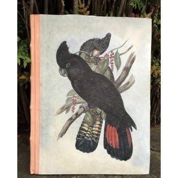 Australia A3 Black Parrot