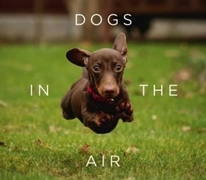 Australia Dogs In The Air