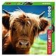 Australia WEINGARTEN, HIGHLAND COW 100