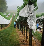 Event September 30th Harvest Event Non- Wine Club