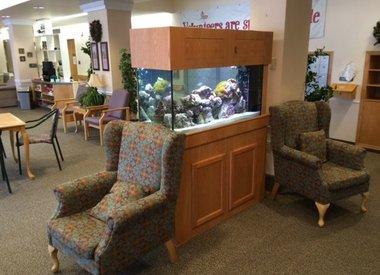 Professional Aquarium Maintenance