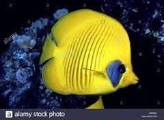 Non Reef Safe