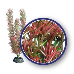 Products tagged with Weco Red Foxtail Plastic Plant