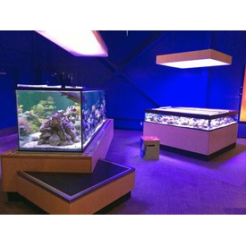 Aquarium Illusions Facility Educational Aquatic Displays by Aquarium Illusions