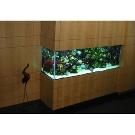 Aquarium Illusions 500G Foyer Tank by Aquarium Illusions