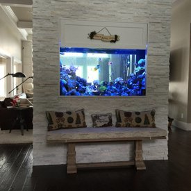 Aquarium Illusions Beautiful Feature Tank by Aquarium Illusions