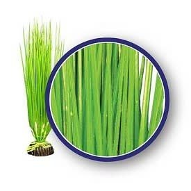 Weco Weco Asian Hairgrass 12""