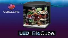 Coralife Biocubes
