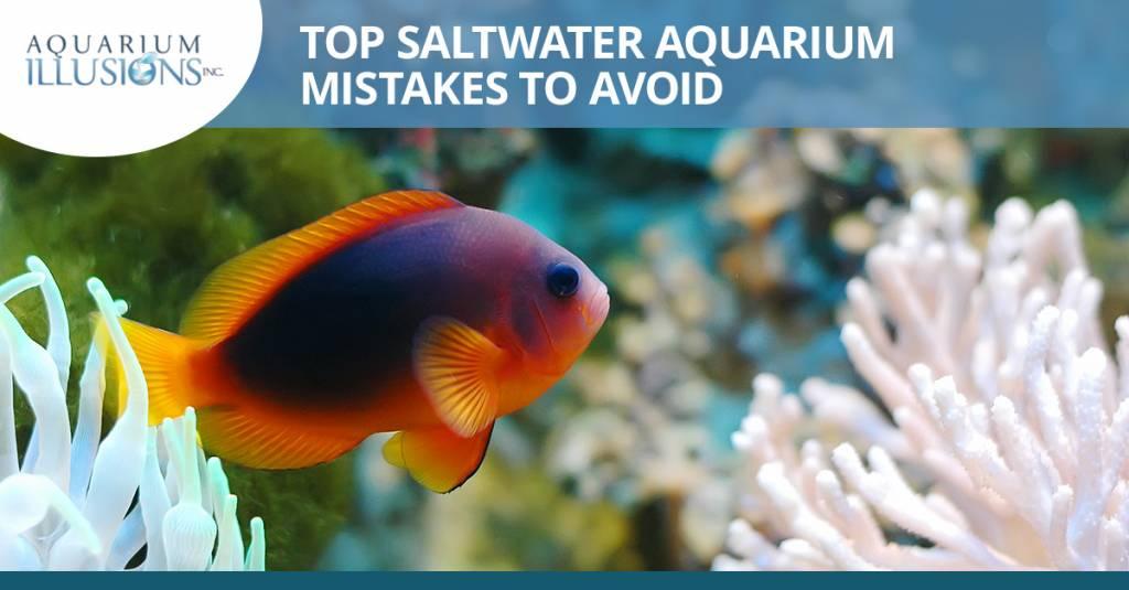 Top Saltwater Aquarium Mistakes To Avoid