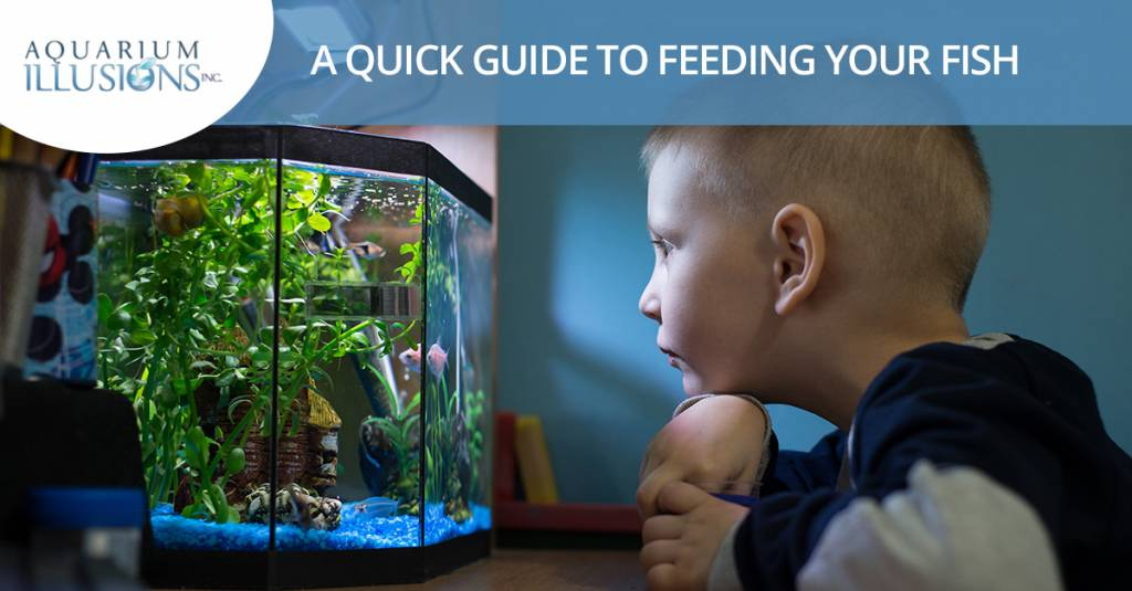 A Quick Guide To Feeding Your Fish