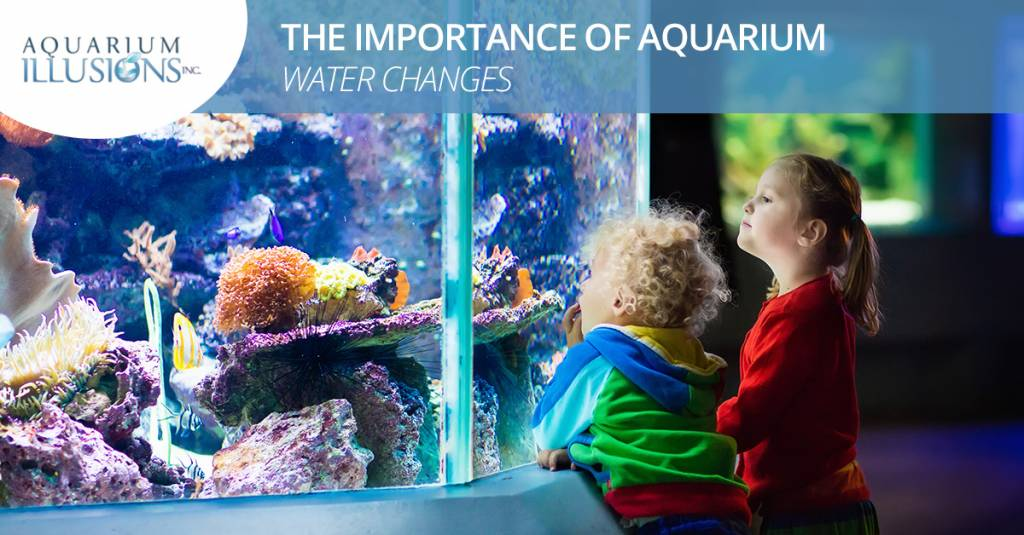 The Importance of Aquarium Water Changes
