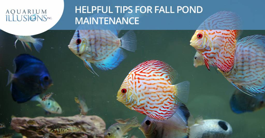 Helpful Tips For Fall Pond Maintenance
