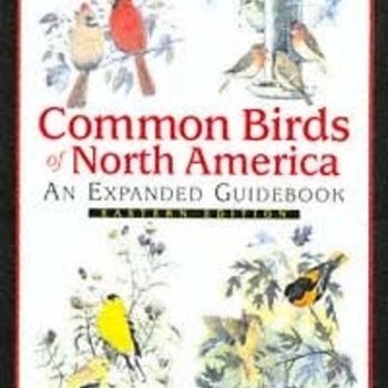 - COMMON BIRDS OF N.A. EAST