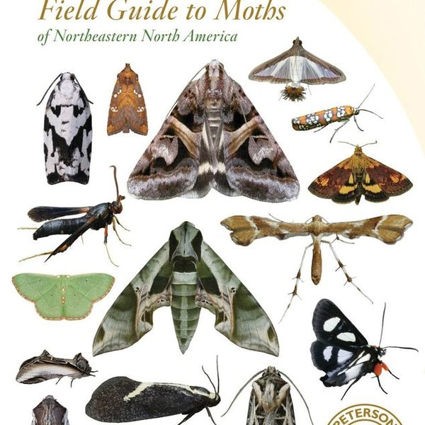 PETERSON FIELD GUIDE TO MOTHS N.E. NORTH AMERICA