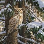 - COBBLE HILL SNOWY PERCH OWL PUZZLE 1000PC