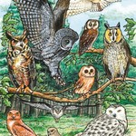 - COBBLE HILL N. AMERICAN OWLS TRAY PUZZLE 35PC