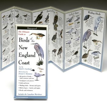 - BIRDS OF THE NEW ENGLAND COAST FOLDING GUIDE