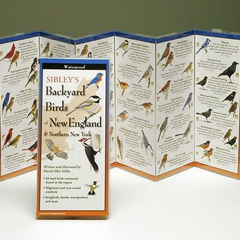 - SIBLEY'S BACKYARD BIRDS N. EAST