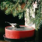 - BIRD WATERER FOR WINTER