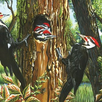 - COBBLE HILL PILEATED WOODPECKERS PUZZLE 1000 PC