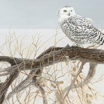 - COBBLE HILL FALLEN WILLOW SNOWY OWL 500PC