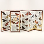 - SIBLEY'S COMMON & SOME EXOTIC BUTTERFLIES OF THE NORTHEAST FOLDING GUIDE