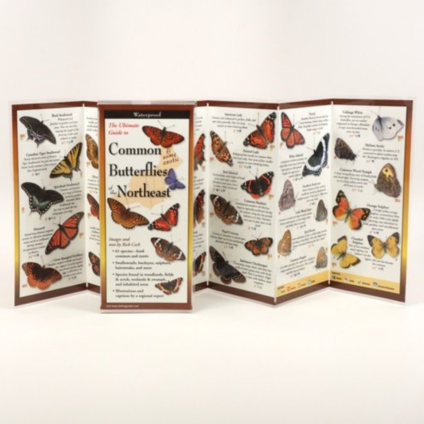- COMMON & SOME EXOTIC BUTTERFLIES OF THE NORTHEAST FOLDING GUIDE