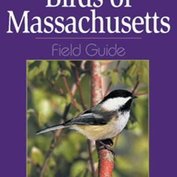 - BIRDS OF MASSACHUSETTS  FIELD GUIDE
