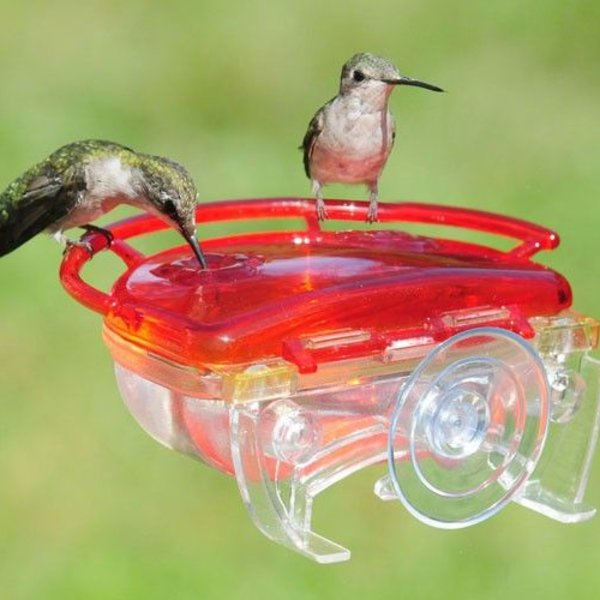 - ASPECTS HUMMINGBIRD GEM WINDOW FEEDER