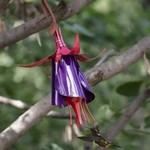 - DESERT STEEL FUCHSIA HUMMINGBIRD FEEDER