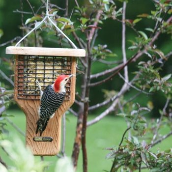 - BIRDS CHOICE WOOD SUET FEEDER W/TAIL PROP