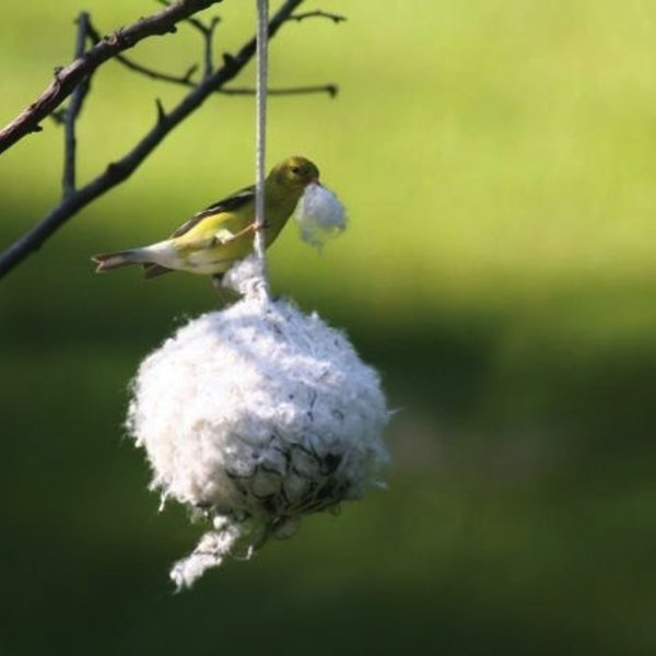 - BIRDS CHOICE COTTONTAIL NEST BUILDING MATERIAL